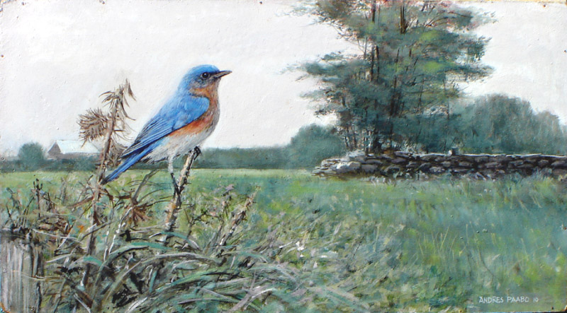 bluebird in rural scene